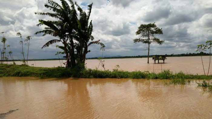 Butuh Bantuan, Rumah-Sawah Warga Lampung Selatan Terendam Banjir