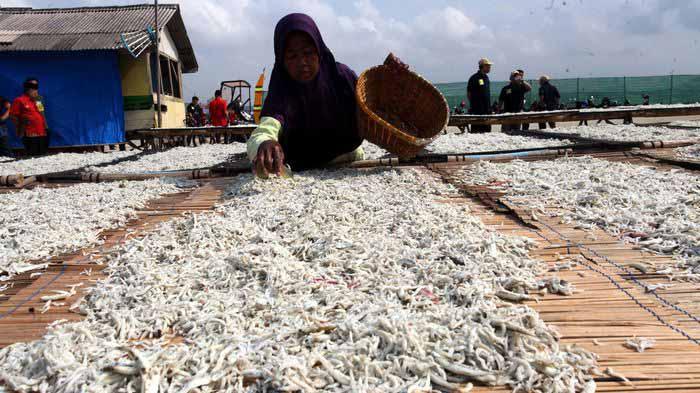Produksi Sejak Tahun 1960-an, Ikan Asin Pulau Pasaran Kini Masuk Pasar Ekspor