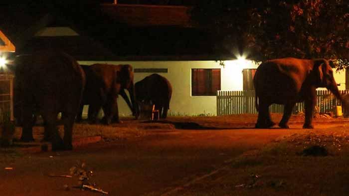 Gajah masuk ke pemukiman warga