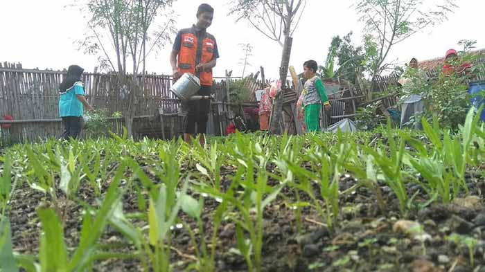 Urban Farming Rumah Zakat