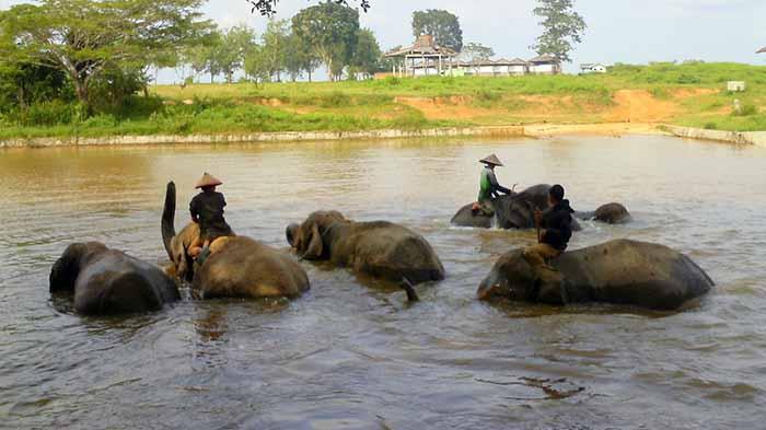 gajah di way kambas mandi