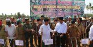 Tanam Jagung di Pringsewu, Menteri Pertanian Libatkan Beberapa Pesantren
