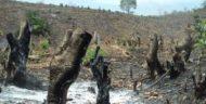 [Kolom] Hari Hutan Sedunia; Tilik Kondisi Hutan Kita Hari Ini