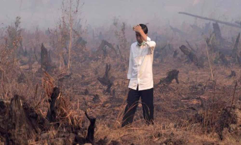 Jokowi dan Karhutla