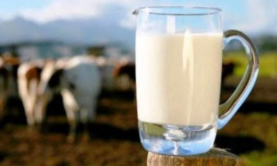 Bahaya Minum Susu Mentah