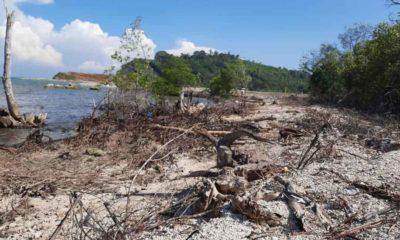 Kondisi Hutan Mangrove